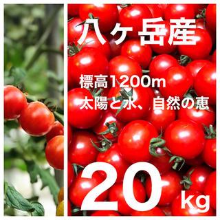 コクトマ!こくあり味濃いめ 八ヶ岳産ミニトマト 約20kg 品質保証付 減農薬(野菜)