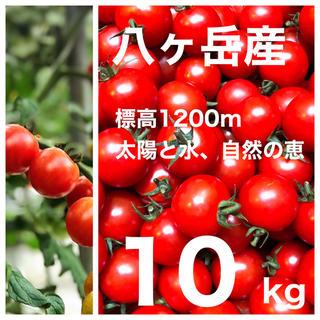 コクトマ!こくあり味濃いめ 八ヶ岳産ミニトマト 約10kg 品質保証付 減農薬(野菜)