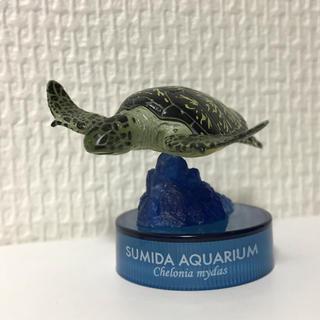 カイヨウドウ(海洋堂)の海洋堂 すみだ水族館フィギュアコレクション アオウミガメ(その他)