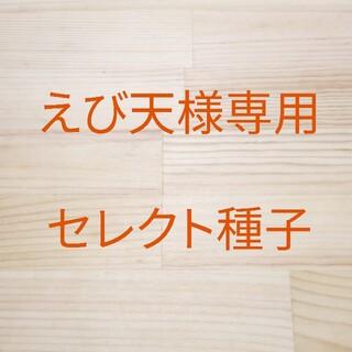 えび天様専用 セレクト種子 2袋(野菜)