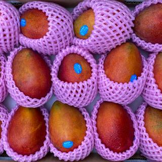 台湾マンゴー 沖縄産と同じアーウィン種のアップルマンゴーをお届け致します。