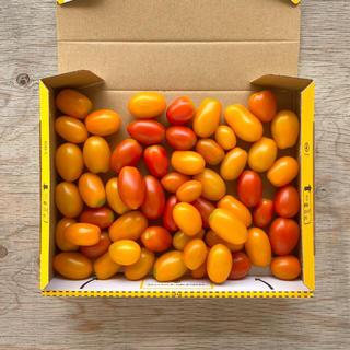 アイコ、イエローアイコ、オレンジアイコ 約850g栽培期間中農薬不使用ミニトマト(野菜)