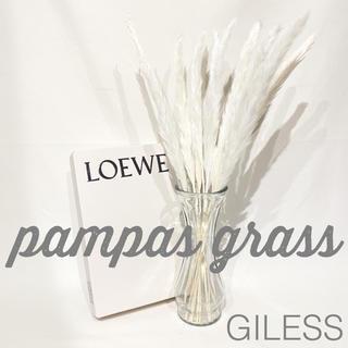パンパスグラス ドライフラワー ホワイト テールリード 花材 15本セット(ドライフラワー)