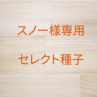 スノー様専用 セレクト種子 3袋(野菜)
