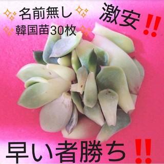 名前無し‼️激安価格‼️韓国苗多肉植物葉挿しセット‼️(その他)