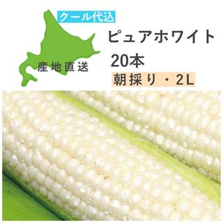 とうもろこし ピュアホワイト 20本 2L 正規品 クール宅急便 レア 白(野菜)