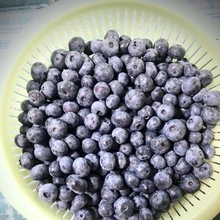 群馬県産 冷凍ブルーベリー 5キロ(フルーツ)