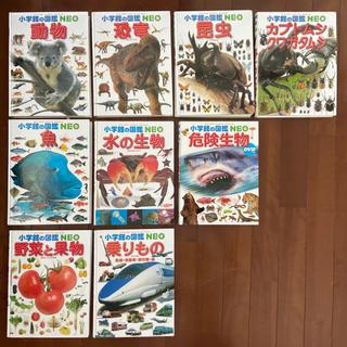 小学館 - 小学館の図鑑 NEO  9冊 セット まとめ 動物 昆虫 魚 恐竜 その他