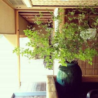 ドウダンツツジ ヤマドウダン 100cm×3本   枝物切り花(その他)