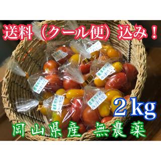 即購入可 岡山県産 無農薬野菜 3種類ミニトマト‼️(野菜)