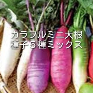 カラフルミニ大根種子 5種ミックス(野菜)