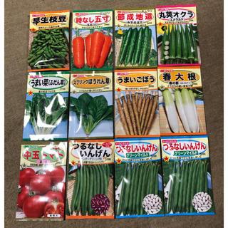 トーホク  種(野菜)