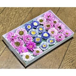 お花屋さんが作ったポンポンアスターのドライフラワー  ④(ドライフラワー)