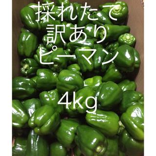 送料無料 訳ありピーマン 4kg 採れたて発送致します!!(野菜)