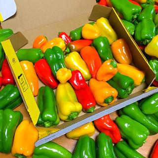 広島県産自然栽培自家製色彩り鮮やか新鮮夏野菜カラーピーマン箱詰めセット(野菜)