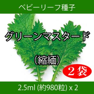 ベビーリーフ種子 B-32 グリーンマスタード(縮緬) 2.5ml x 2袋(野菜)