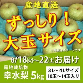 【購入OK】幸水梨5kg★大玉【8/18~23お届け分】