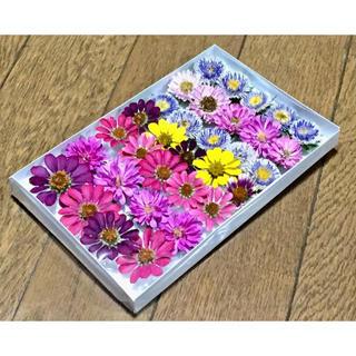 お花屋さんが作ったポンポンアスターのドライフラワーset  ①(ドライフラワー)