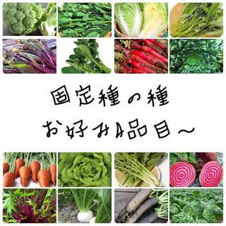お好み4品目〜★伝統野菜★固定種の種セット(野菜)
