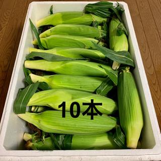 朝採り!北海道 江別産 ブランドとうもろこし 恵ゴールド 10本(野菜)