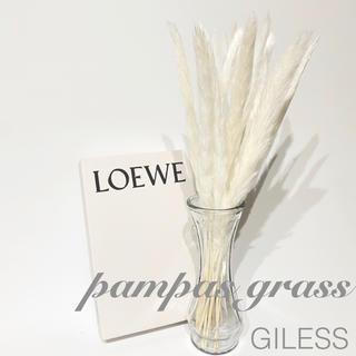パンパスグラス ドライフラワー テールリード 花材 ホワイト 白 15本セット(ドライフラワー)