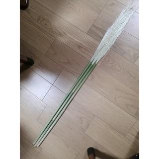 パンパスグラス 約120cm 6本(ドライフラワー)