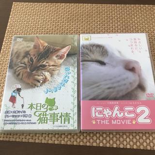 本日の猫事情DVDにゃんこ2the movie初回限定2枚組(日本映画)