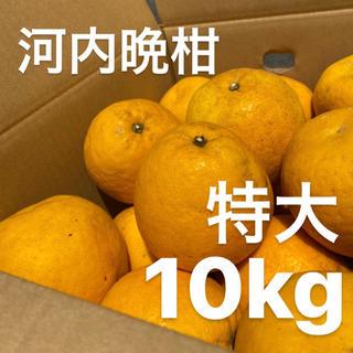 特大 宇和ゴールド 10Kg  河内晩柑 愛媛 みかん(フルーツ)