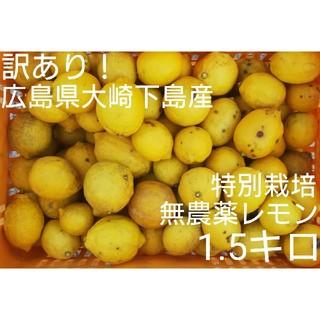 チロル様専用 広島県大崎下島産 特別栽培無農薬レモン 1.5キロ(フルーツ)