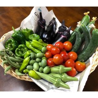 おまかせ夏野菜セット(60サイズ)(野菜)