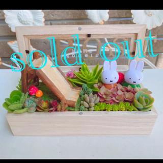 ★★大きめ❤️可愛い★蓋付き木箱★寄せ植え★このまま飾れます★多肉植物(その他)