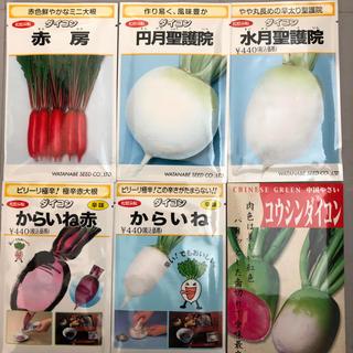 野菜 種 6種類 詰め合わせ(野菜)