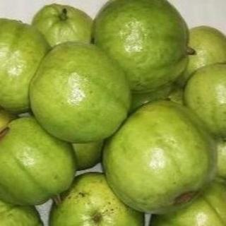 RK0814硬1.5『グァバ(白)1.5キロ』 果物 サラダ利用可能品種(フルーツ)