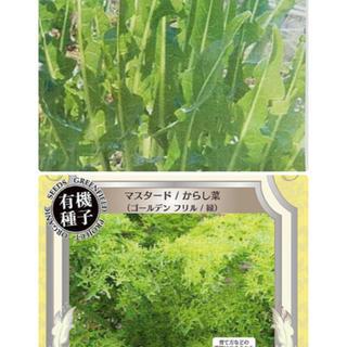 イタリアンタンポポグリーンとマスタードからし菜の種セット❣️(野菜)