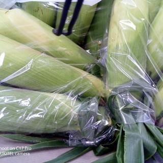 岩手県産 とうもろこし 10本(野菜)
