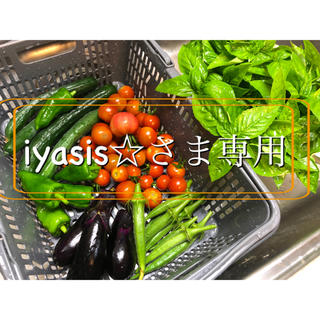 おまかせ夏野菜セット(80サイズ)(野菜)