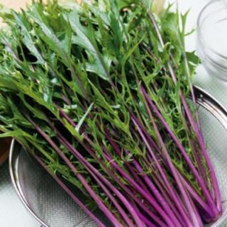 サラダに最適な『赤紫ミズナ』 水菜種子 30粒❣️