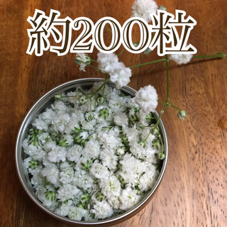 カスミソウ 白 花材200粒以上(ドライフラワー)