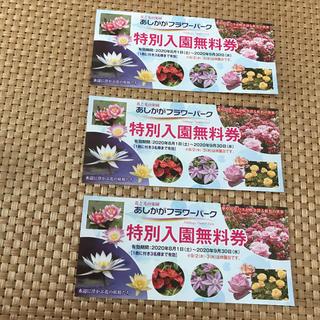 足利あしかがフラワーパーク特別入園無料券チケット3枚(遊園地/テーマパーク)