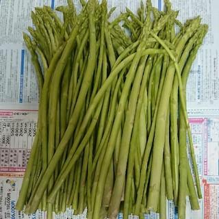 佐賀県産グリーンアスパラ1.8キロ(訳あり)(野菜)