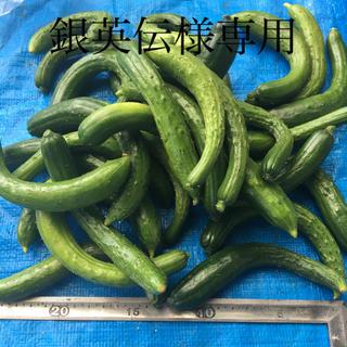 きゅうり(野菜)