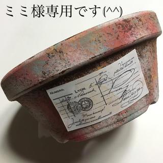 多肉植物リメイク缶鉢寄せ植えにどうぞミミ様専用です(^^)(その他)