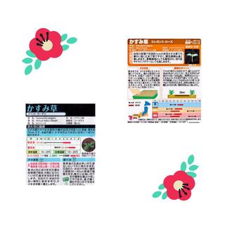 花屋さん定番のフラワー『かすみ草』です❣️  赤と白一緒に楽しめます❗️❗️(その他)