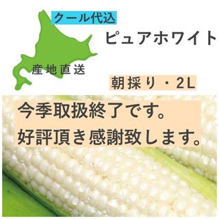 【今季取扱終了】 とうもろこし ピュアホワイト 20本 2L 正規品 白(野菜)