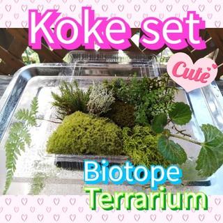苔おかわりセット 苔7種・植物3種の詰め合わせ てんこ盛り!!(その他)