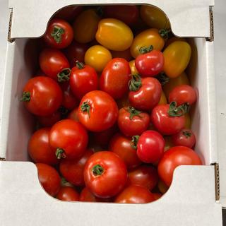 ミニトマト、ミディトマト2、0kg(野菜)