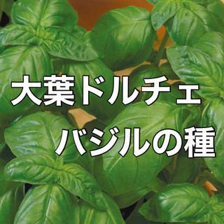 【お洒落なドルチェに‼️】大葉ドルチェバジルの種 30粒 ハーブ バジル タネ(野菜)