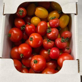 ミディ、ミニトマト2、0kg(野菜)