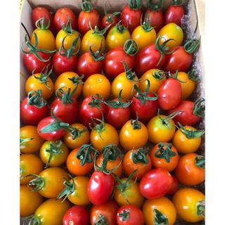 ミニトマト アイコ 1.1kg  無消毒です!(野菜)