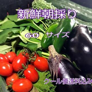 野菜箱詰め【野菜おまかせ♪野菜お試しセット】新鮮野菜 (野菜)